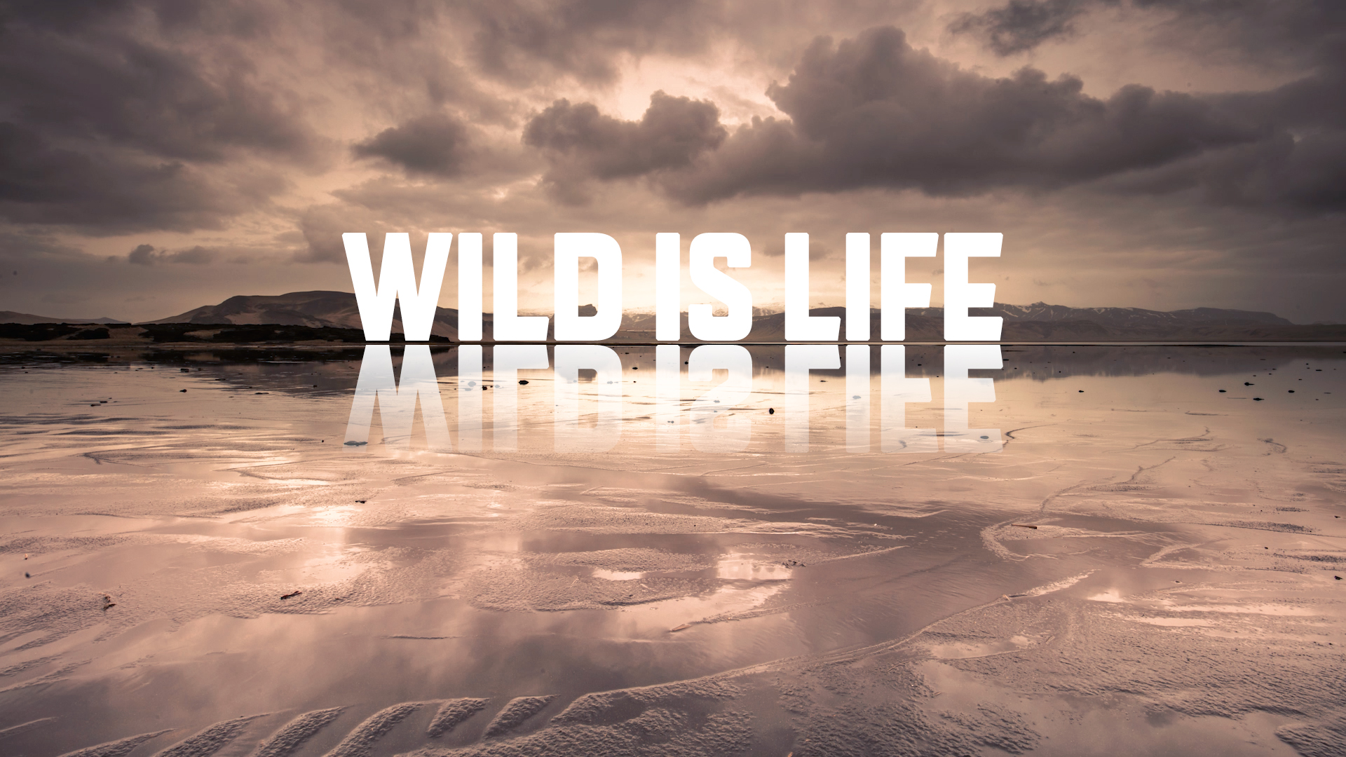 Estreia do vídeo Wild Is Life